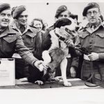 rob-the-para-dog-with-his-sas-regiment-receiving-his-pdsa-dickin-medal